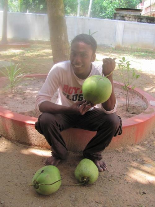 Мисфар сорвал кокосы с пальмы в нашем дворе