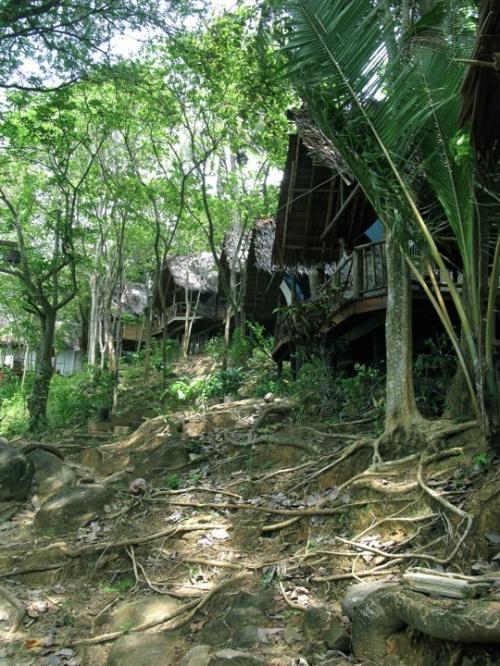Свой волшебный джунгль