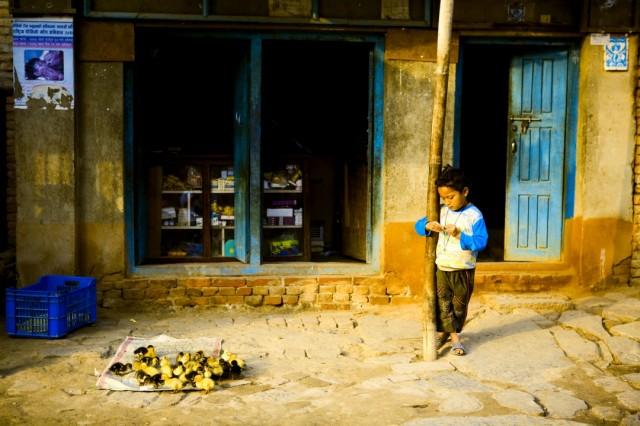 Непал. Коккана. 2009 г.