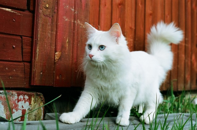 Кот в момент осознания прихода осени