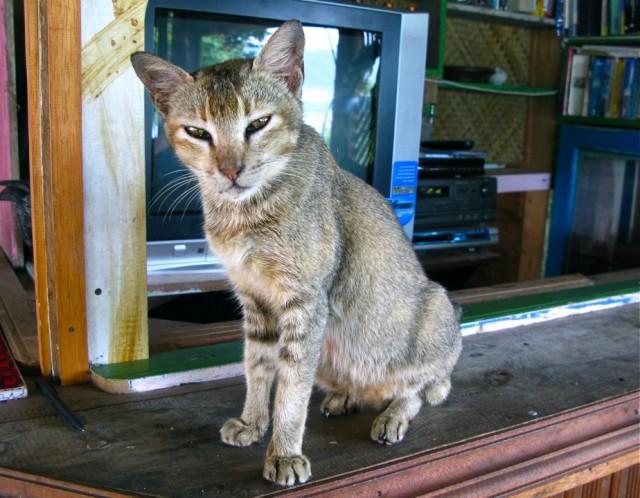 Если у меня когда-нибудь будет кошка, я назову ее Суматрой