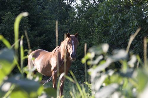 Конь задумчивый