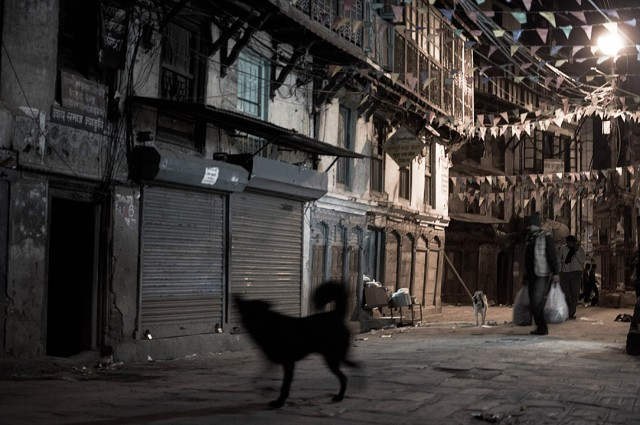 Ночная собака