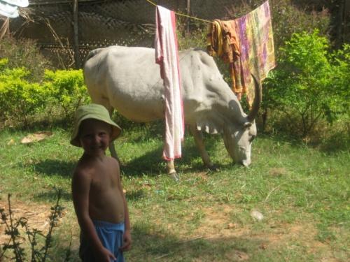 Артем и домашние коровы)))