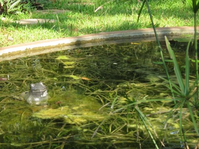 Жабенюка в коммьюнити Упасана. Принимает ванны.