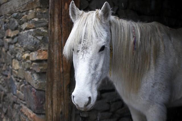 Белый конь (пошел снег)