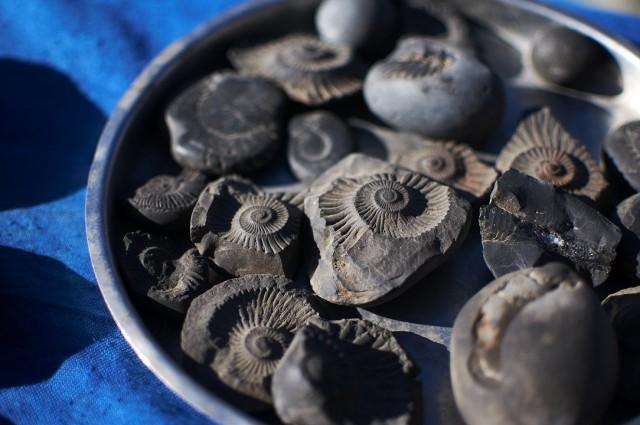 классицизма фото названия окаменелости моллюсков прежде чем приступить
