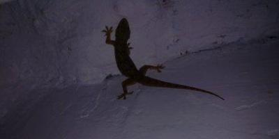 А этот обитатель живет на потолке моей комнаты)))