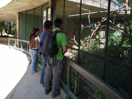 И бесплатный зоопарк