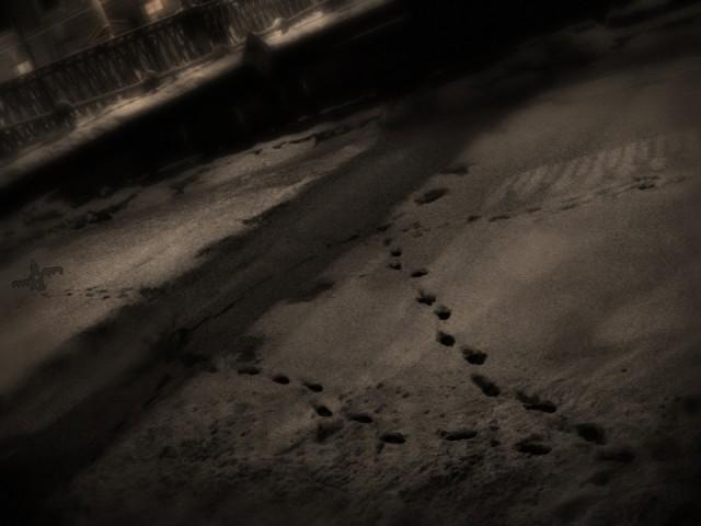 сНежное.. ночные следы под львиным мосткОМ..