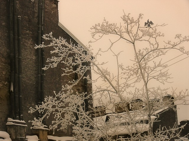сНежное.. дерево и крыша
