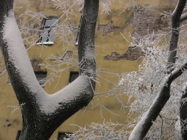 сНежное.. дерево, стена, окно