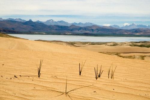 Пустыня и барханы...
