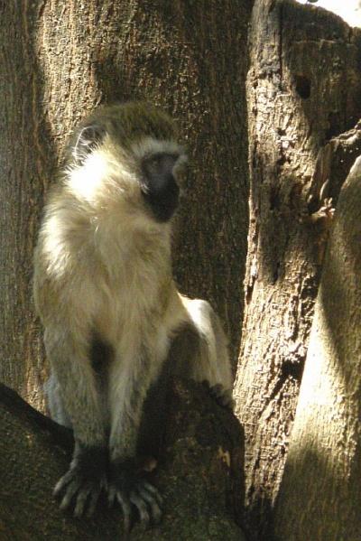Фотографировать юрких обезьян – не самое легкое занятие
