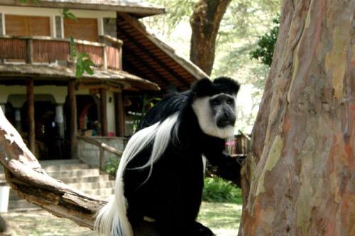 И еще одна обезьянка