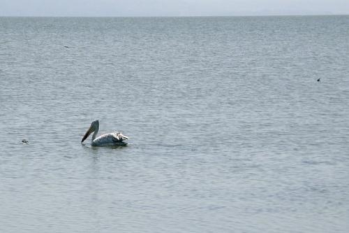 Ловец в мутной воде