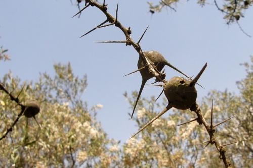 Гнезда неизвестных мне насекомых