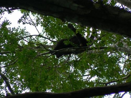 Здес есть десятки обезьяны-некоторые имеют голос как тигры-очень страшновато было когда услышал впервые
