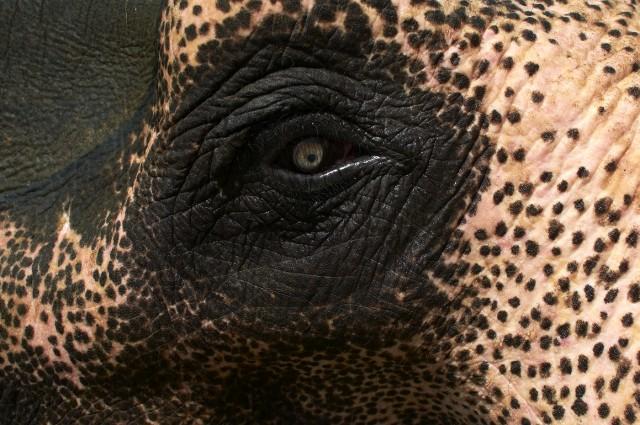Купание слонов в Читване 13