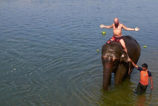 Купание слонов в Читване 2