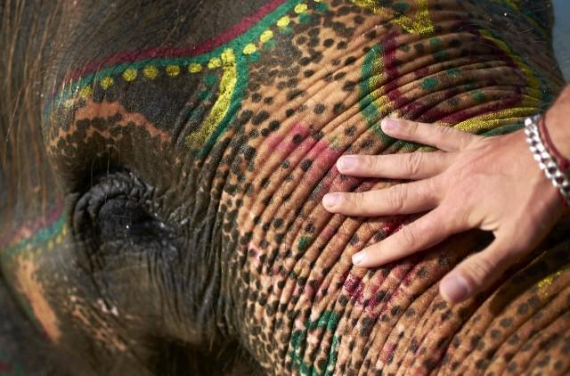 Купание слонов в Читване 7