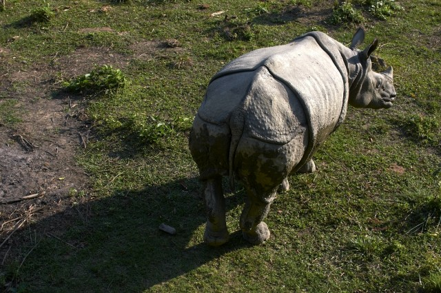 Просто носорог