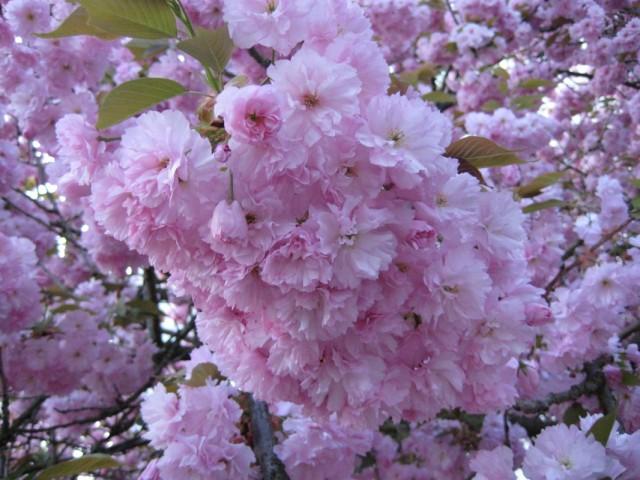 у   нас  тоже  Весна-а-а-а-а-а   !!!   :)))