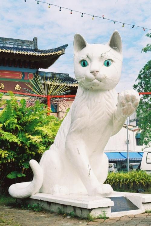 Great Cat of Kuching - главный кот города, на всех открытках!