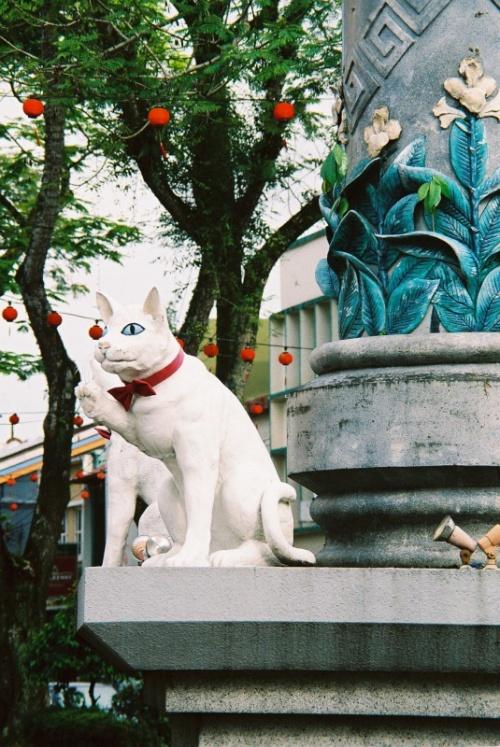 Кот у китайского квартала