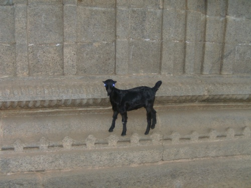 Козодемон на стене Портала
