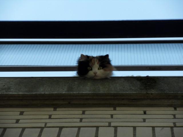 кошка сверху