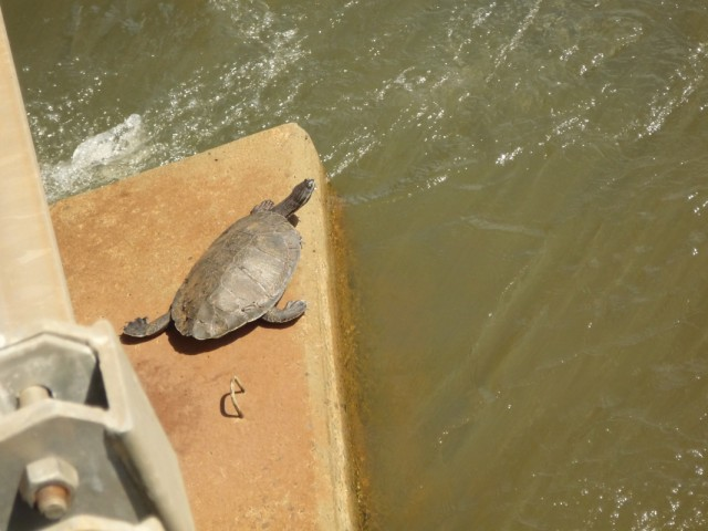 черепахи греются на солнышке