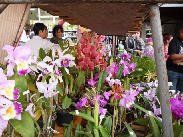 орхидеи, выращенные япнцами, продают японцы :))
