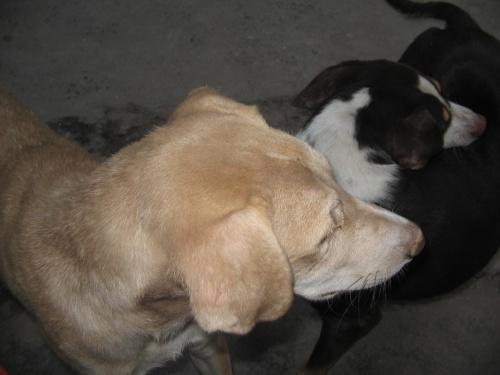 утренние собаки
