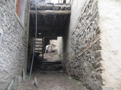 улицы Пьюкара