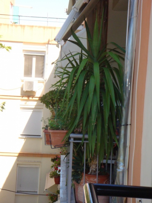 Салоники..обычный балкон.