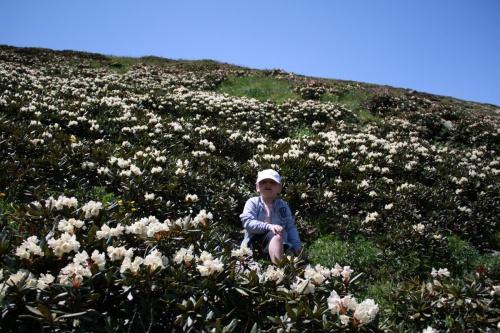 альпинист в цветочках)