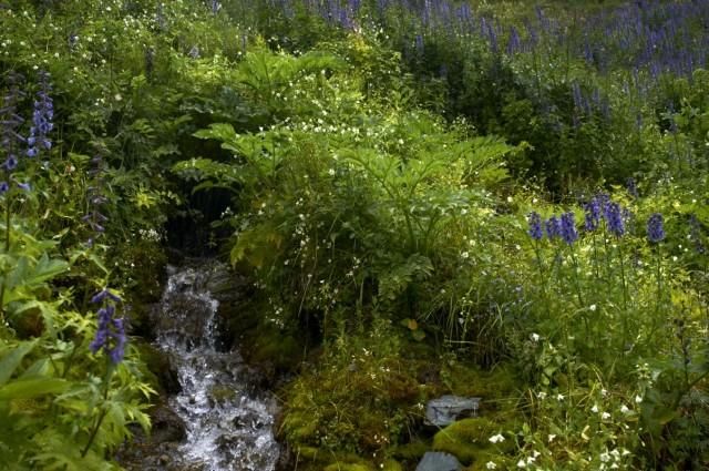 Растительный мир Алтая