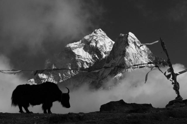 Непал №81