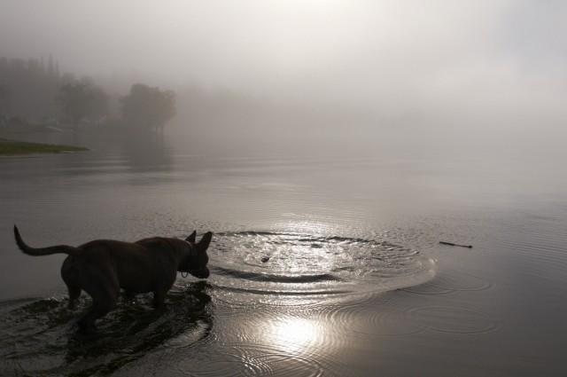 Телецкое озеро: Настроение №33