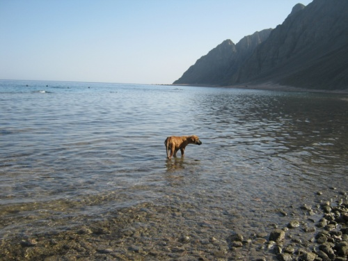 Тайгер,морская собака