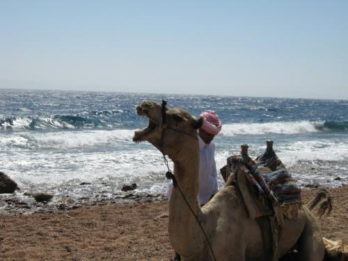 песни пустыни на берегу моря