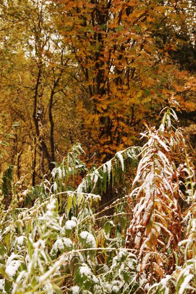 Осенняя зима