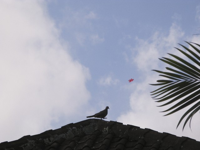 В саду водились голуби