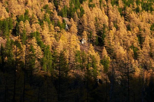 Его лес