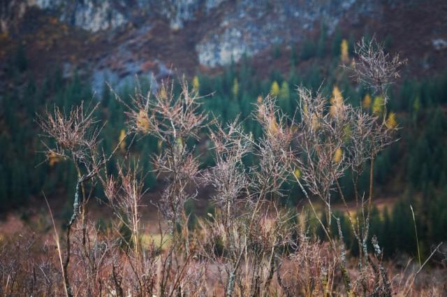 Мертвые травы