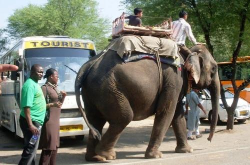 слоны!!!