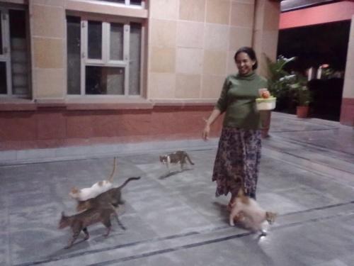 кошкам скармливаем все недоеденное, скоро кошек на кампусе будет больше студентов