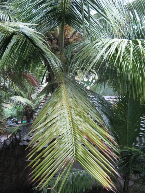 дождь,балкон,пальмы