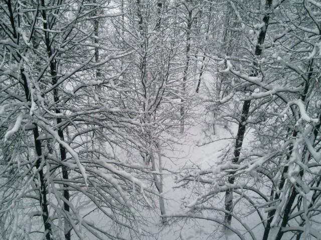 снег, балкон, березы